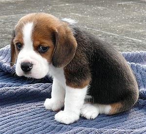 Don't make little Jeffrey sad